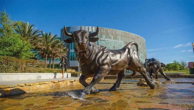 Bull Fountain University of South Florida Marshall Center-Tampa,Florida